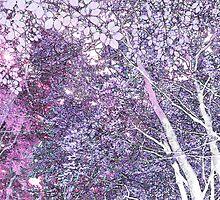 Winter woodland by Sandra O'Connor