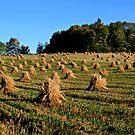 Hay Harvest by Brenda Dow