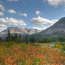 Rose Creek by Dennis Jones - CameraView