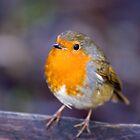 Robin by Nick Potts