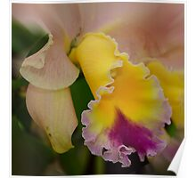'picture perfect' Orchid 9 Poster