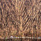 Burnt Forest, Kinglake. by Ern Mainka