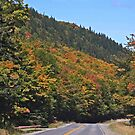 Fall on Route #11 by Brenda Dow