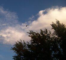 cloud and bird by gabbielizzie
