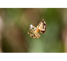 Cotton Candy Spider-Style Photographic Print