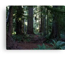Forest Cathedral Canvas Print