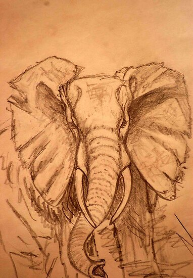 AFRICAN ELEPHANT - PENCIL SCHETCH by Magaret Meintjes