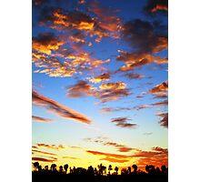Desert Oaks Photographic Print