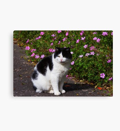 Bartholomew the Cat Pluscarden Abbey Canvas Print