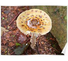 Mushroom Puddle Poster