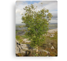 Burren Tree Canvas Print