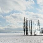 Poplars in the Snow by JulianJ