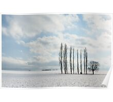 Poplars in the Snow Poster