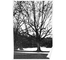 lacey trees & wintry bench Poster