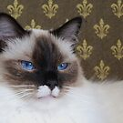 My handsome little Murphy by Marjorie Wallace