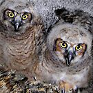 Great Horned Babies by kayzsqrlz