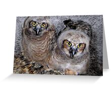 Great Horned Babies Greeting Card