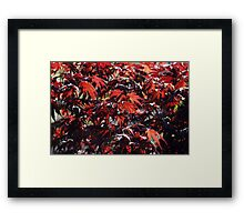 Red Autumn Framed Print