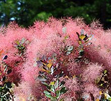 Pink Bush  by Peggy Berger