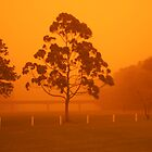 Australian dust storm by sunset