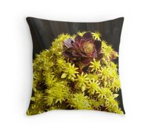 Black Aeonium - flower head Throw Pillow