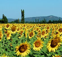 Let the Sunshine in by worldtripper