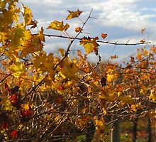 Autumn vines by David  Altorfer