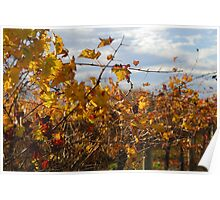 Autumn vines Poster
