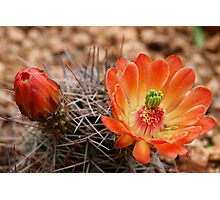Desert Blooms Photographic Print