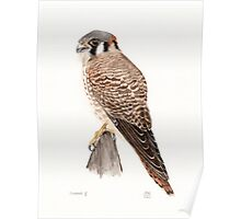Falcon Painting Watercolor Poster