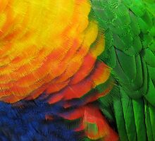 Colorful Bird by Photo4art