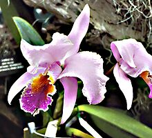Purple Orchids by Brian31180