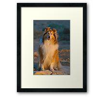 Sun Dog Framed Print