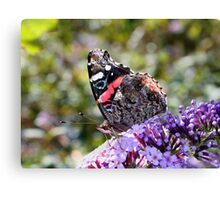 'Red Admiral' Canvas Print
