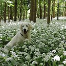 Ditte in a carpet of ramsons by Trine