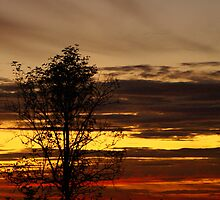 September Sunset Tree by g369