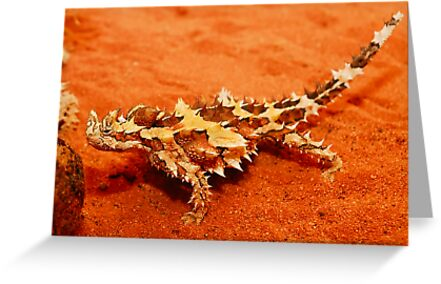 Thorny Devil (Moloch horridus) by Shannon Benson