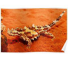 Thorny Devil (Moloch horridus) Poster