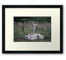 Stag & Doe-5 Framed Print