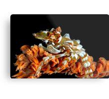 Creeping Crab Metal Print