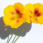 Yellow by leemcpherson