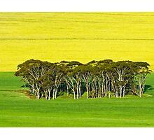 Aussie, Aussie, Aussie Photographic Print