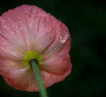Poppy by Cathy Middleton