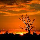 Sunrise @ Edenhope # 2 by Murray Wills