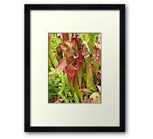 Pitcher Plants Framed Print