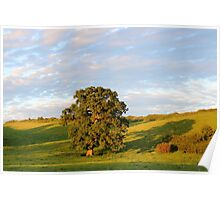 English Countryside In Somerset Poster