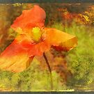 "Poppy (from the  ""Painted Flowers"" series) by EvaMarIza"