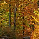 Autumn in the beech wood by Trine