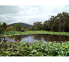 Lotus Mountain View Photographic Print