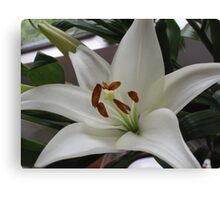 Wonderfully White With Super Stamens Canvas Print